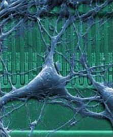 Neuron-chip link advances