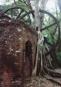 Belize sugar factory ruins